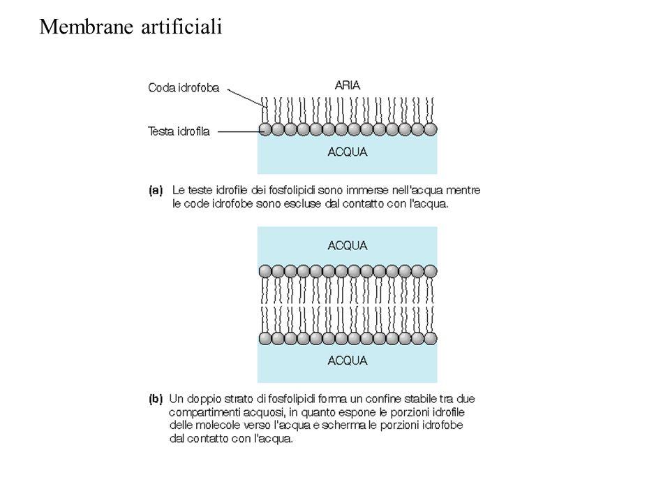 Membrane artificiali