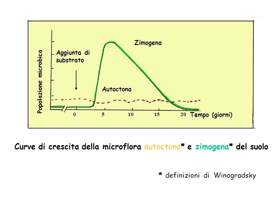 Zimogena Autoctona Aggiunta di substrato Popolazione microbica 05101520 Tempo (giorni) Curve di crescita della microflora autoctona* e zimogena* del s