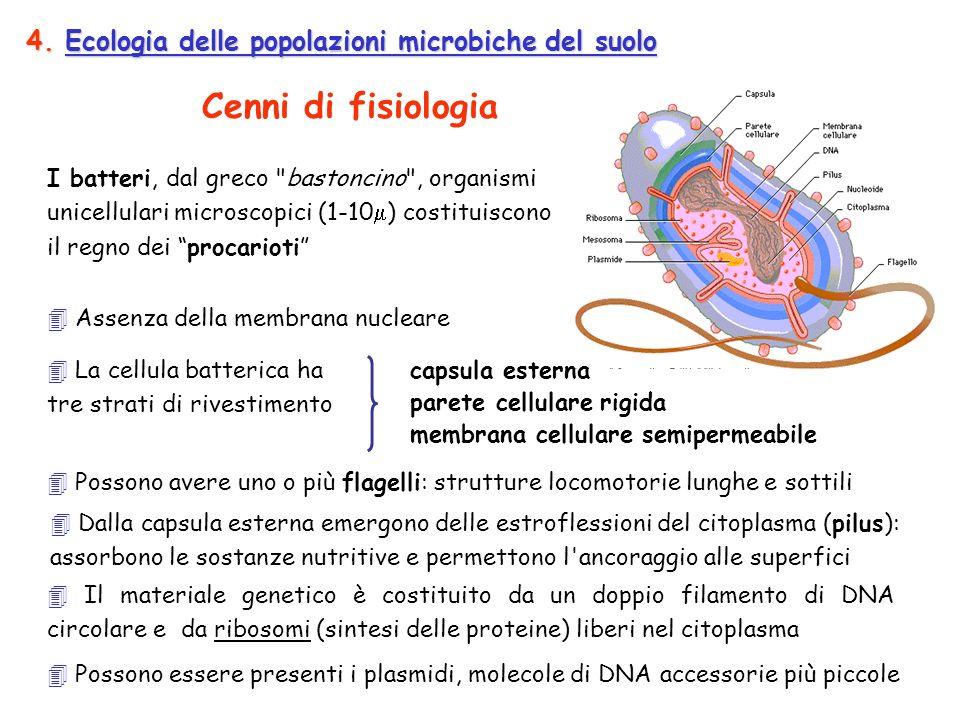 4. Ecologia delle popolazioni microbiche del suolo Possono avere uno o più flagelli: strutture locomotorie lunghe e sottili I batteri, dal greco