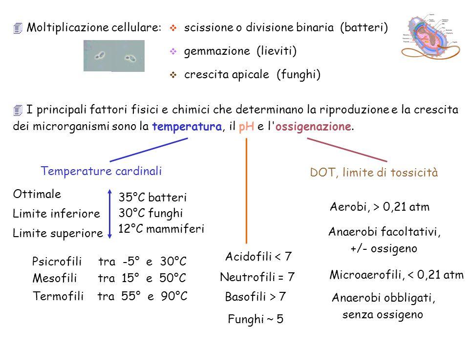 Moltiplicazione cellulare: scissione o divisione binaria (batteri) gemmazione (lieviti) crescita apicale (funghi) I principali fattori fisici e chimic