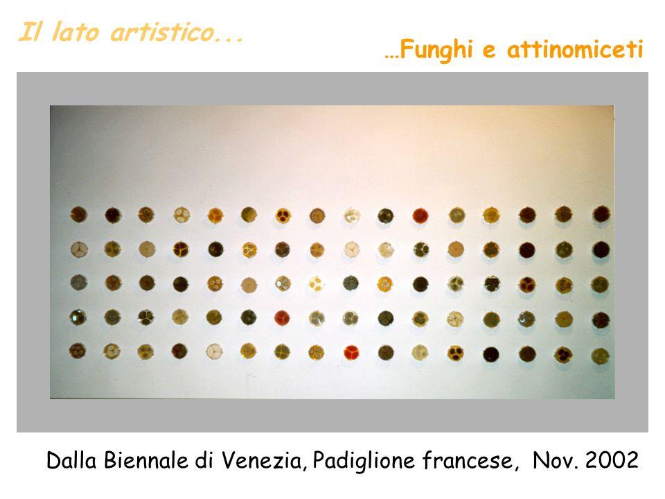 Il lato artistico... Dalla Biennale di Venezia, Padiglione francese, Nov. 2002 …Funghi e attinomiceti