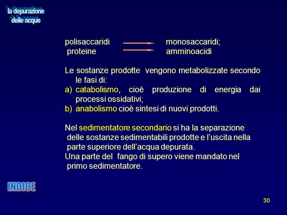 30 polisaccaridi monosaccaridi; proteine amminoacidi Le sostanze prodotte vengono metabolizzate secondo le fasi di: a)catabolismo, cioè produzione di