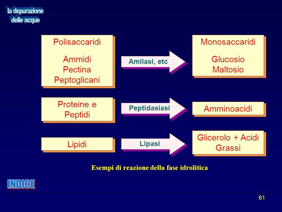 61 Polisaccaridi Ammidi Pectina Peptoglicani Polisaccaridi Ammidi Pectina Peptoglicani Monosaccaridi Glucosio Maltosio Monosaccaridi Glucosio Maltosio