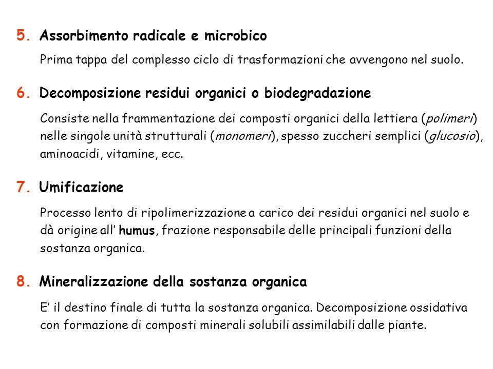 E il destino finale di tutta la sostanza organica. Decomposizione ossidativa con formazione di composti minerali solubili assimilabili dalle piante. C