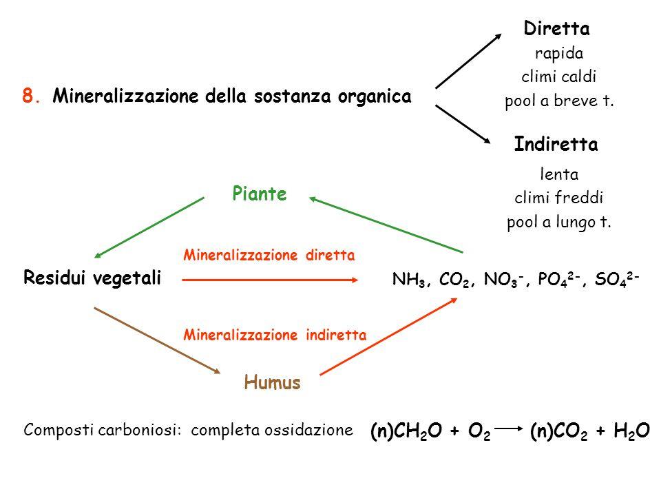 Diretta Indiretta Residui vegetali NH 3, CO 2, NO 3 -, PO 4 2-, SO 4 2- Mineralizzazione diretta Mineralizzazione indiretta Humus Piante Composti carb