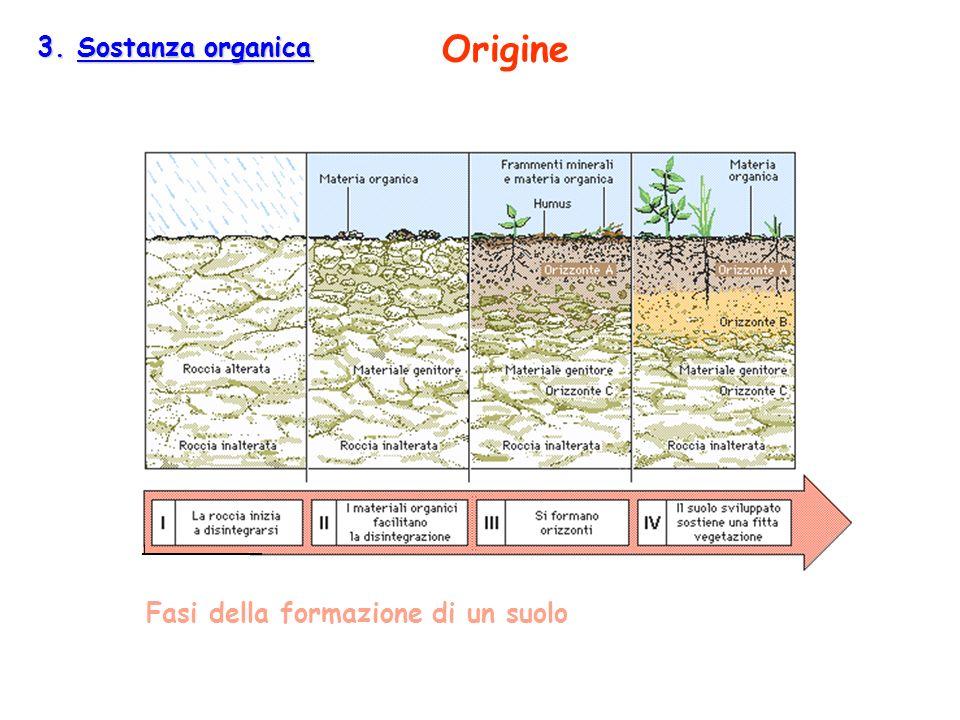 3. Sostanza organica 3. Sostanza organica Fasi della formazione di un suolo Origine