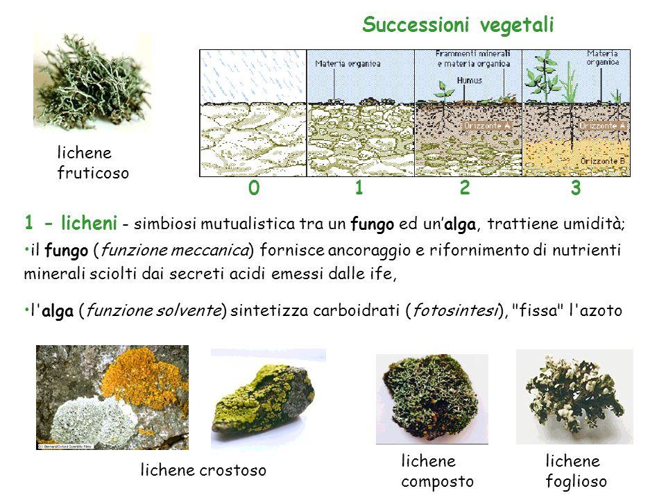 1 - licheni - simbiosi mutualistica tra un fungo ed unalga, trattiene umidità; Successioni vegetali 1230 lichene foglioso lichene composto lichene cro