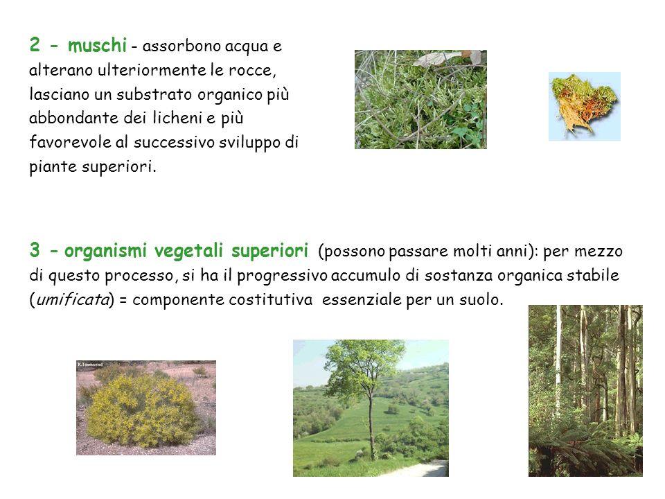 3 - organismi vegetali superiori (possono passare molti anni): per mezzo di questo processo, si ha il progressivo accumulo di sostanza organica stabil