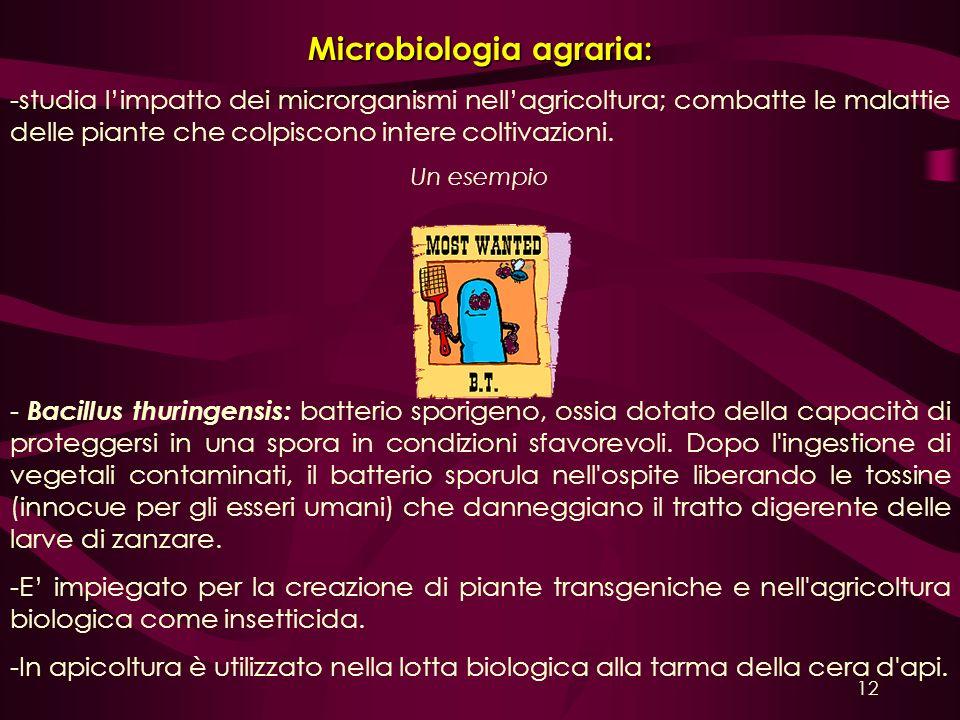 Microbiologia agraria: -studia limpatto dei microrganismi nellagricoltura; combatte le malattie delle piante che colpiscono intere coltivazioni. Un es