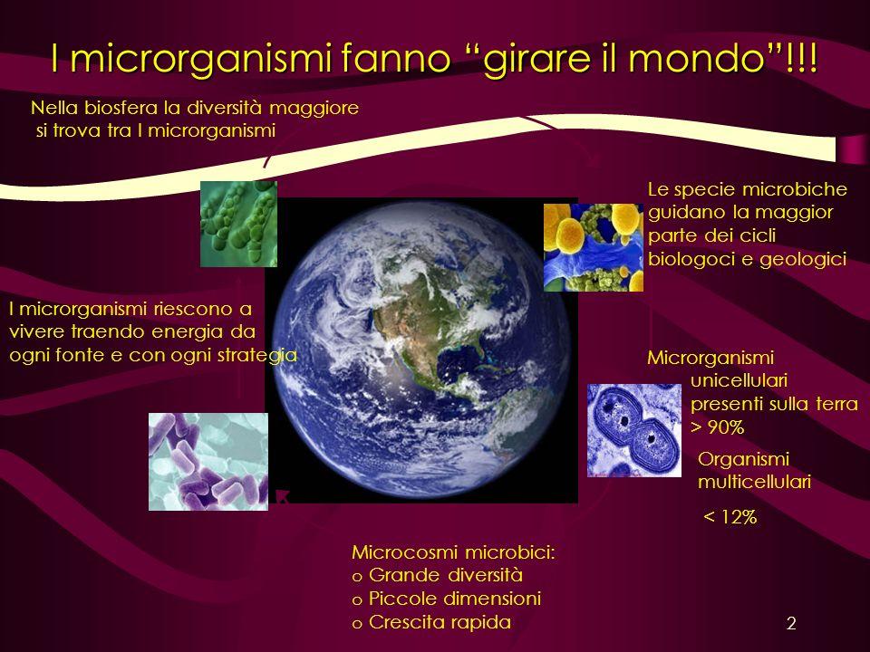 I microrganismi fanno girare il mondo!!! Nella biosfera la diversità maggiore si trova tra I microrganismi Le specie microbiche guidano la maggior par