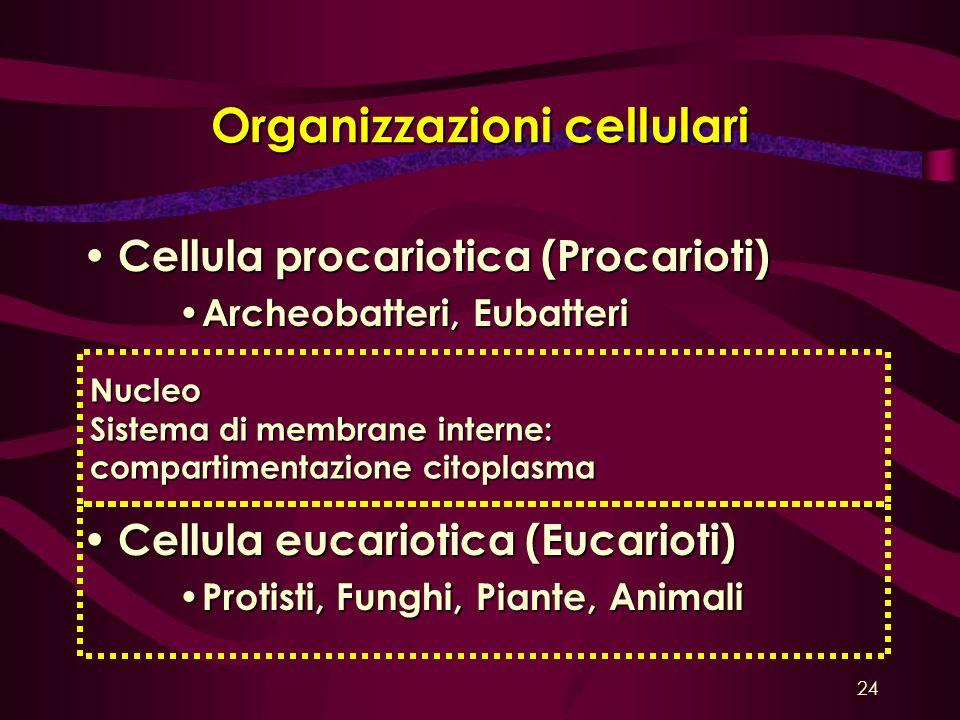 Organizzazioni cellulari Cellula procariotica (Procarioti) Cellula procariotica (Procarioti) Archeobatteri, Eubatteri Archeobatteri, Eubatteri Cellula