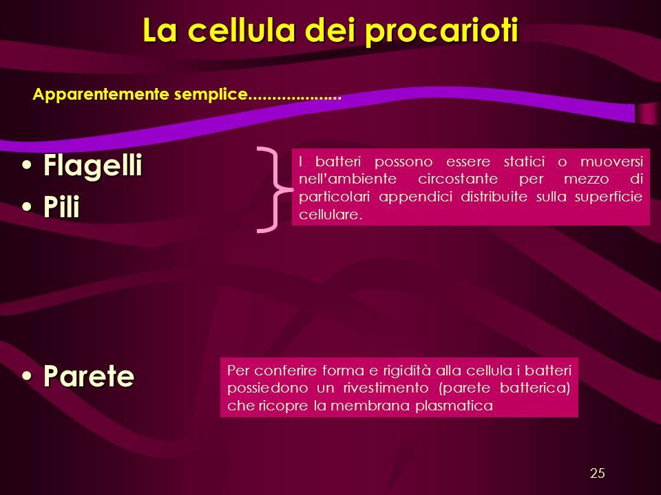 La cellula dei procarioti Flagelli Flagelli Pili Pili Parete Parete Apparentemente semplice.................... I batteri possono essere statici o muo
