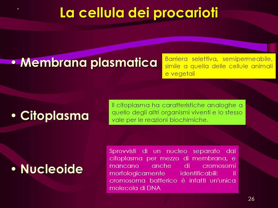 La cellula dei procarioti Membrana plasmatica Membrana plasmatica Citoplasma Citoplasma Nucleoide Nucleoide Il citoplasma ha caratteristiche analoghe