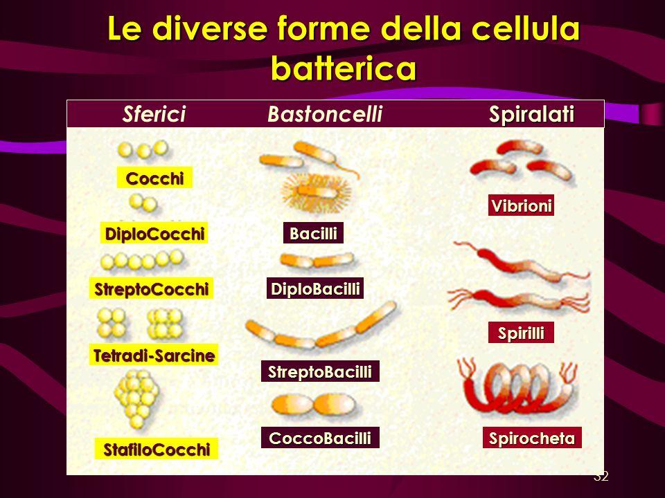 Le diverse forme della cellula batterica Cocchi DiploCocchi StreptoCocchi Tetradi-Sarcine StafiloCocchi Bacilli DiploBacilli StreptoBacilli CoccoBacil