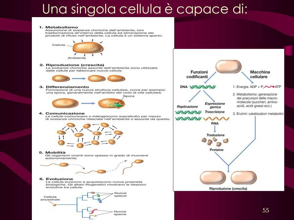 Una singola cellula è capace di: 55