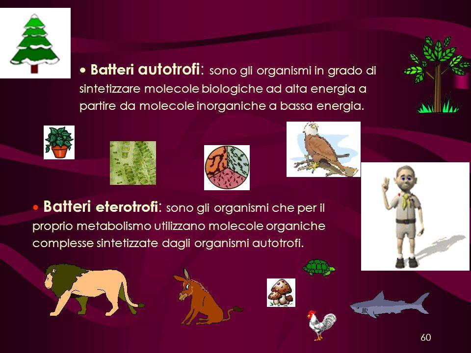 Batteri autotrofi : sono gli organismi in grado di sintetizzare molecole biologiche ad alta energia a partire da molecole inorganiche a bassa energia.