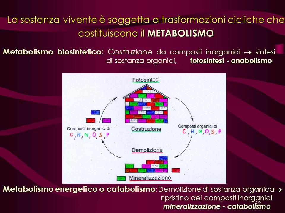 fotosintesi - anabolismo Metabolismo biosintetico: Costruzione da composti inorganici sintesi di sostanza organici, fotosintesi - anabolismo mineraliz