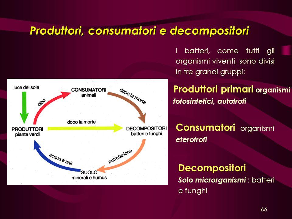 Produttori, consumatori e decompositori I batteri, come tutti gli organismi viventi, sono divisi in tre grandi gruppi: Produttori primari organismi fo