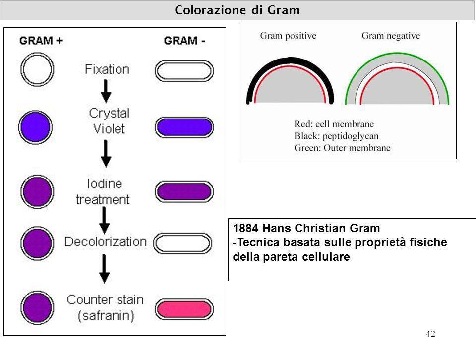Colorazione di Gram 1884 Hans Christian Gram -Tecnica basata sulle proprietà fisiche della pareta cellulare 42