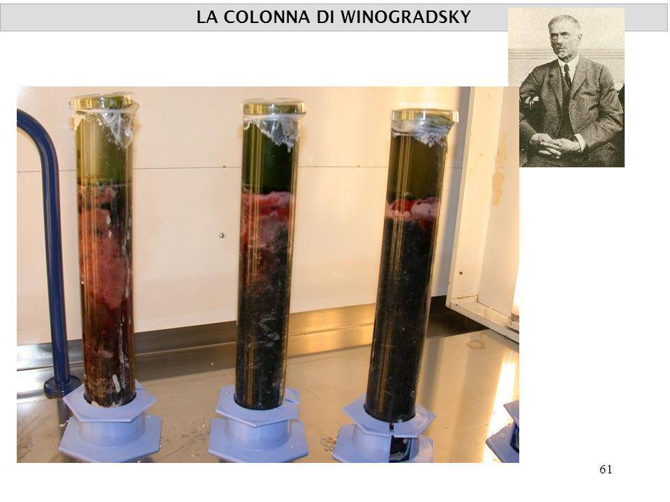 LA COLONNA DI WINOGRADSKY 61