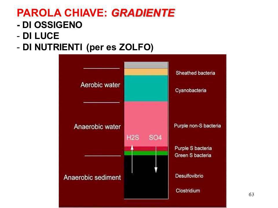 GRADIENTE PAROLA CHIAVE: GRADIENTE - DI OSSIGENO - DI LUCE - DI NUTRIENTI (per es ZOLFO) 63