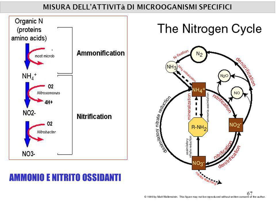 MISURA DELLATTIVITà DI MICROOGANISMI SPECIFICI AMMONIO E NITRITO OSSIDANTI 67