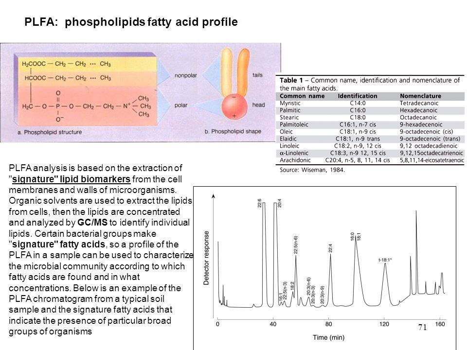 PLFA: phospholipids fatty acid profile PLFA analysis is based on the extraction of