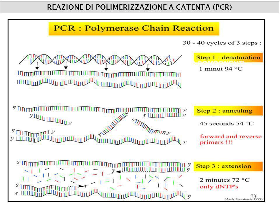 COMPONENTI TEMPERATURA REAZIONE DI POLIMERIZZAZIONE A CATENTA (PCR) 73