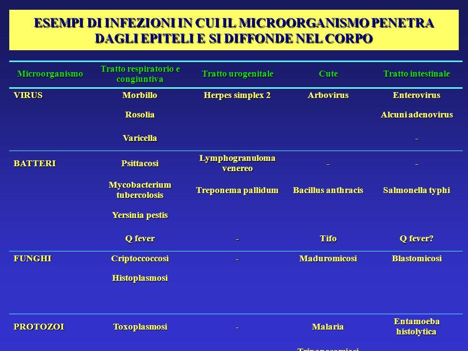 ESEMPI DI INFEZIONI IN CUI IL MICROORGANISMO PENETRA DAGLI EPITELI E SI DIFFONDE NEL CORPO Microorganismo Tratto respiratorio e congiuntiva Tratto uro