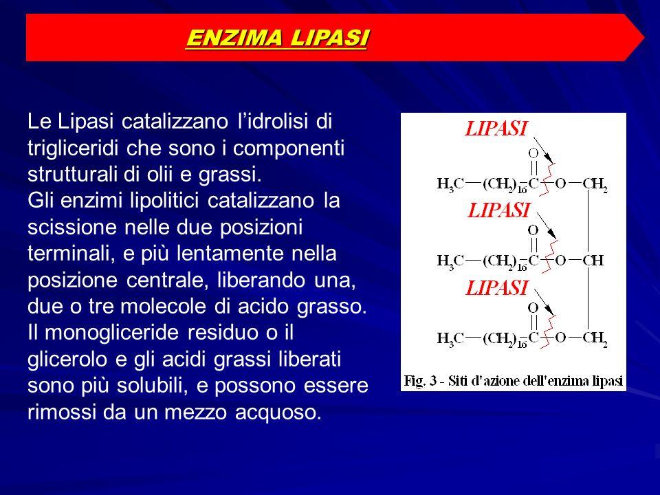ENZIMA LIPASI Le Lipasi catalizzano lidrolisi di trigliceridi che sono i componenti strutturali di olii e grassi. Gli enzimi lipolitici catalizzano la