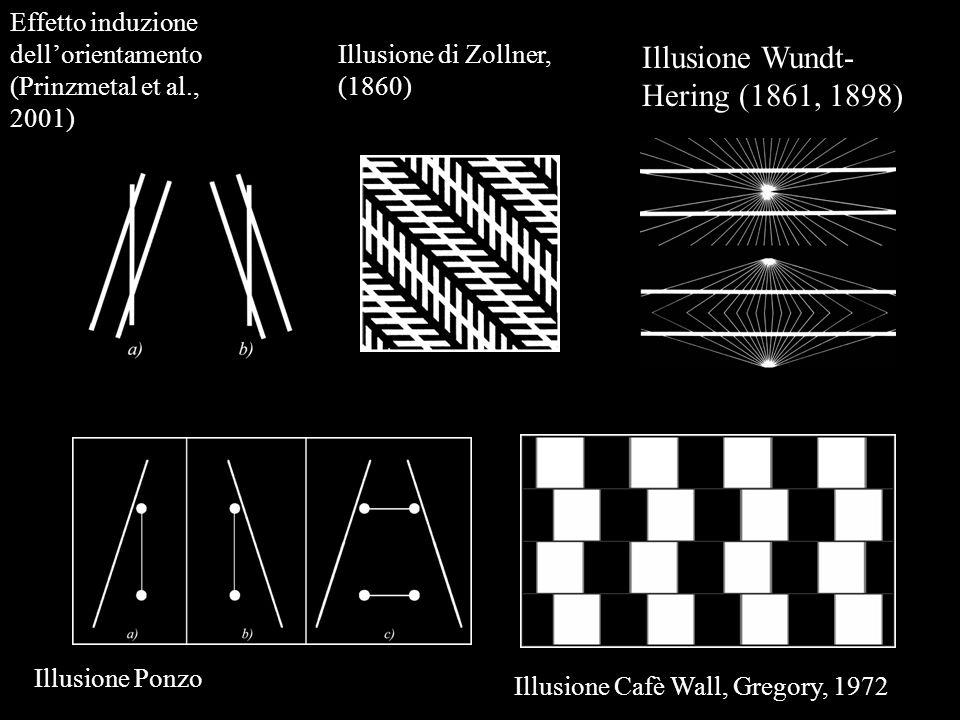 Illusione Wundt- Hering (1861, 1898) Effetto induzione dellorientamento (Prinzmetal et al., 2001) Illusione Cafè Wall, Gregory, 1972 Illusione di Zoll