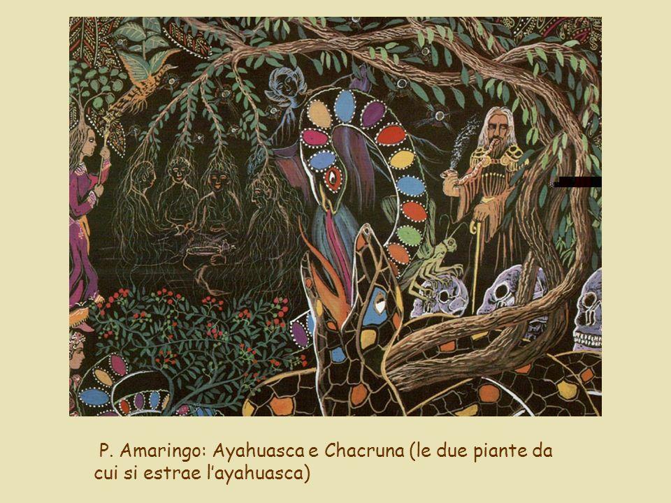 P. Amaringo: Ayahuasca e Chacruna (le due piante da cui si estrae layahuasca)