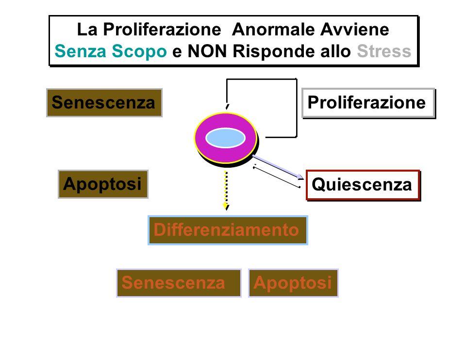 La Proliferazione Anormale Avviene Senza Scopo e NON Risponde allo Stress La Proliferazione Anormale Avviene Senza Scopo e NON Risponde allo Stress Pr