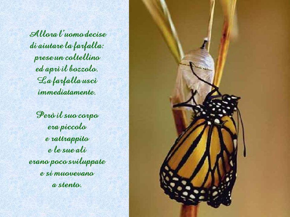 Dopo molto tempo, sembrava che il buco fosse sempre della stessa dimensione e che la farfalla si fosse arresa. Sembrava che ormai avesse fatto tutto q