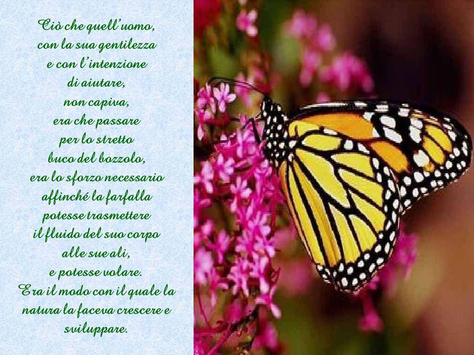 Non successe nulla! La farfalla passò il resto della sua esistenza trascinandosi per terra con un corpo rattrappito e con le ali poco sviluppate. Non