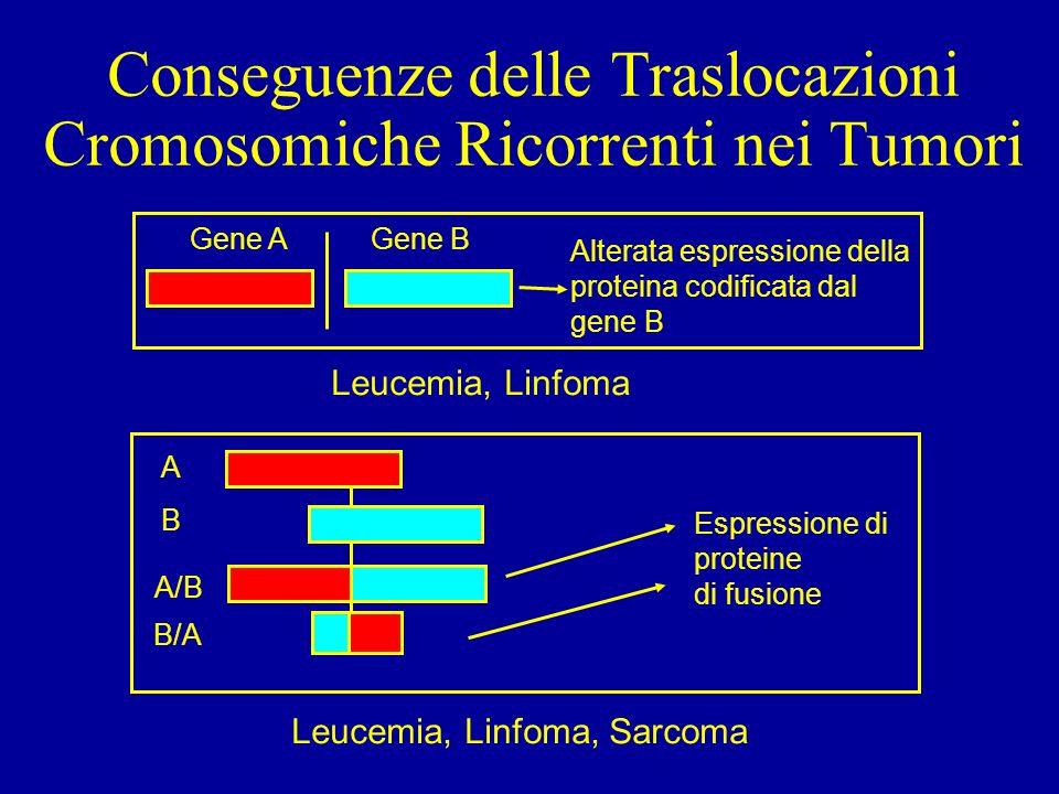 Conseguenze delle Traslocazioni Cromosomiche Ricorrenti nei Tumori Gene AGene B Alterata espressione della proteina codificata dal gene B Leucemia, Li