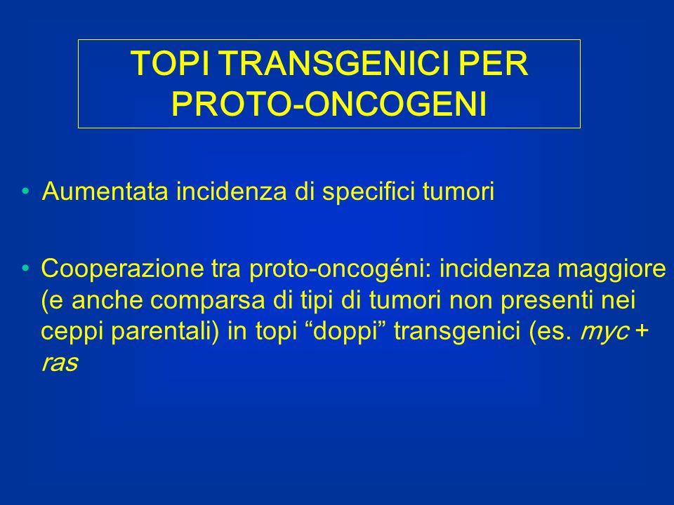 TOPI TRANSGENICI PER PROTO-ONCOGENI Aumentata incidenza di specifici tumori Cooperazione tra proto-oncogéni: incidenza maggiore (e anche comparsa di t