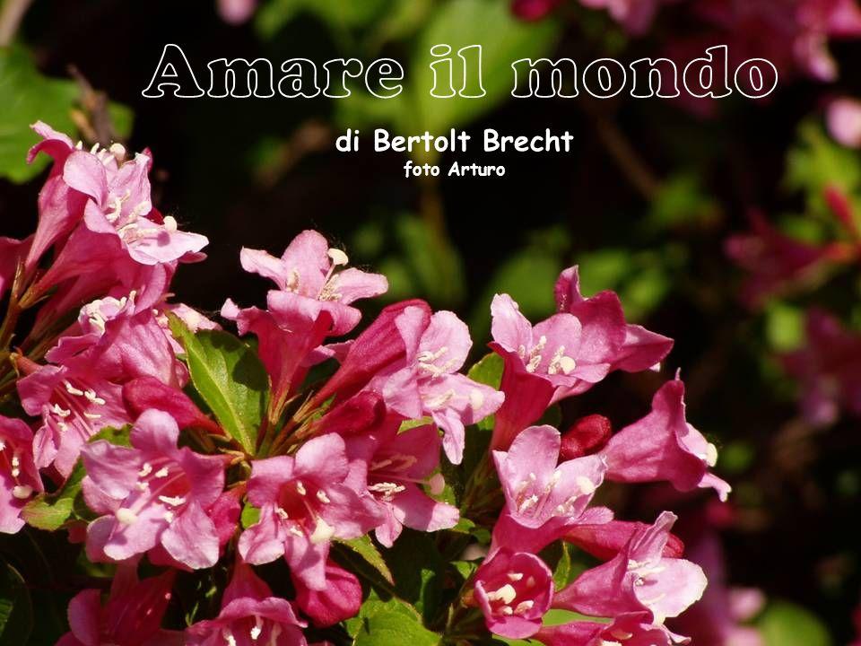Amare il mondo di Bertolt Brecht foto Arturo