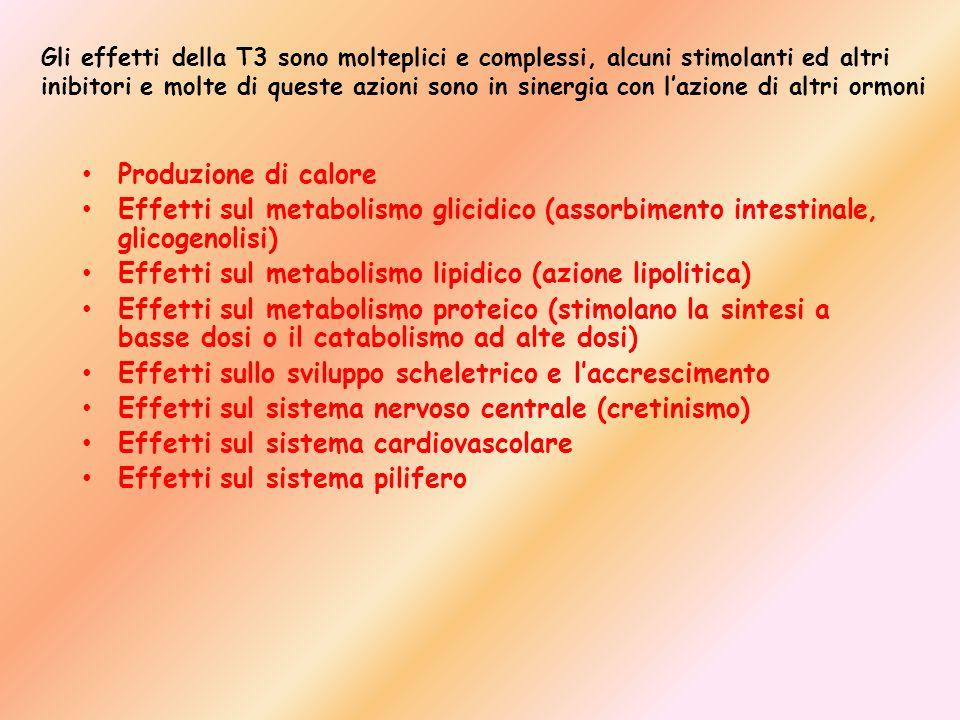 Produzione di calore Effetti sul metabolismo glicidico (assorbimento intestinale, glicogenolisi) Effetti sul metabolismo lipidico (azione lipolitica)