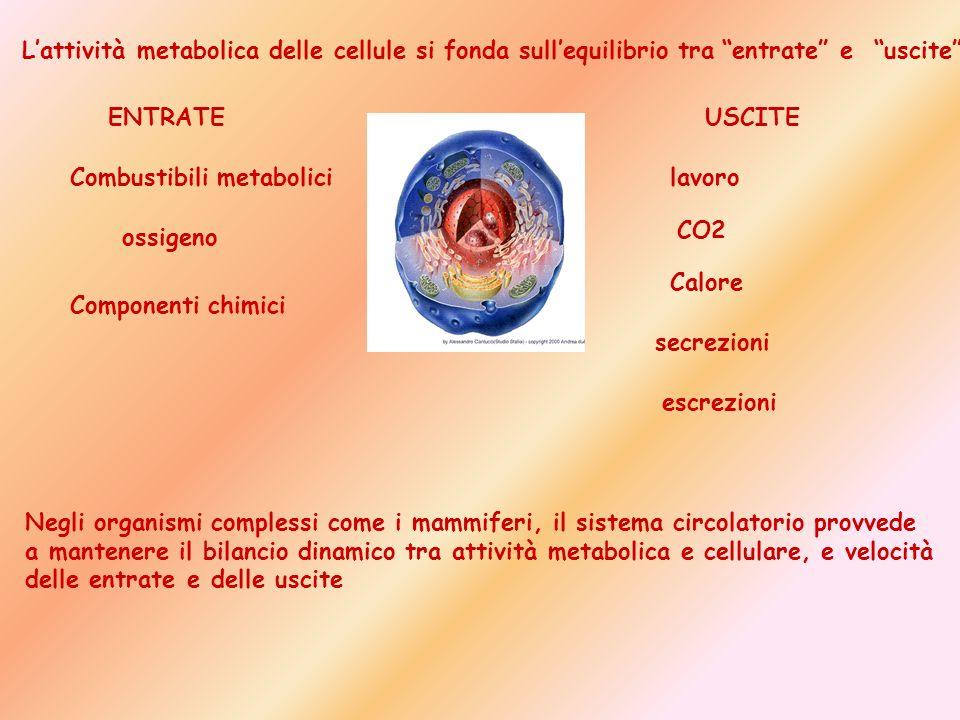 ENTRATEUSCITE Combustibili metabolici ossigeno Componenti chimici lavoro CO2 Calore secrezioni escrezioni Lattività metabolica delle cellule si fonda