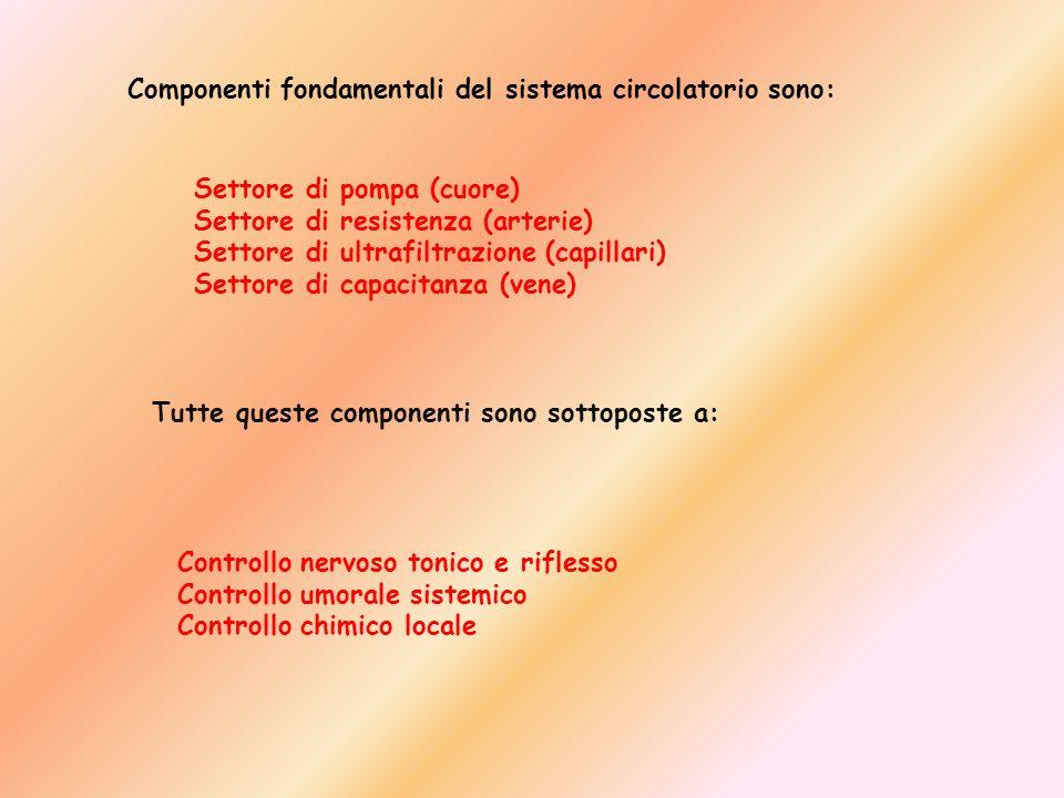 Componenti fondamentali del sistema circolatorio sono: Settore di pompa (cuore) Settore di resistenza (arterie) Settore di ultrafiltrazione (capillari