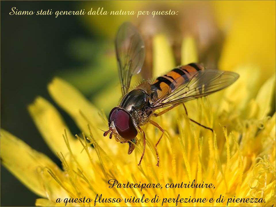 Siamo stati generati dalla natura per questo: Partecipare, contribuire, a questo flusso vitale di perfezione e di pienezza.