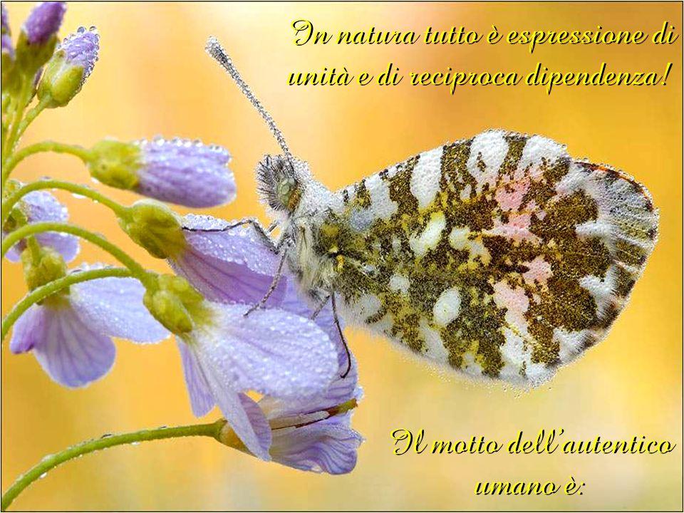 Il motto dellautentico umano è: In natura tutto è espressione di unità e di reciproca dipendenza!