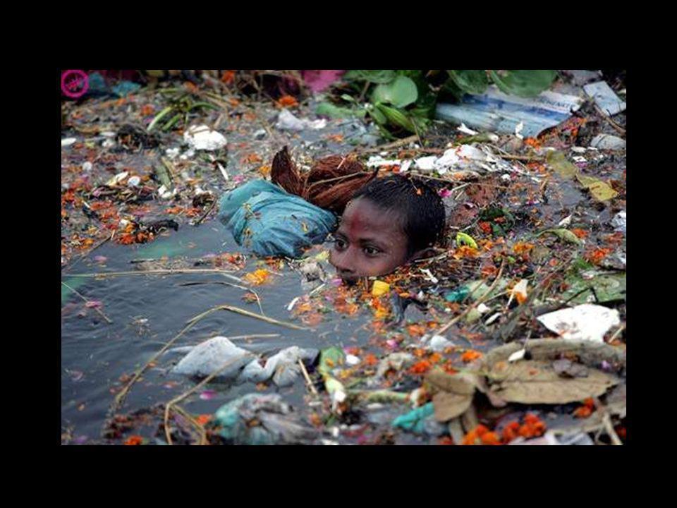 I sacchetti trovano la loro strada verso il mare nelle fogne e negli impianti idraulici - CNN.com/tecnhology 16 Novembre 2007