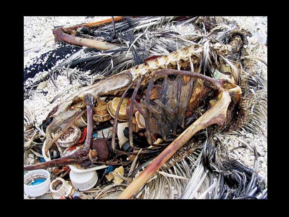 Gli uccelli restano incastrati senza speranza - Riporto WWF 2005
