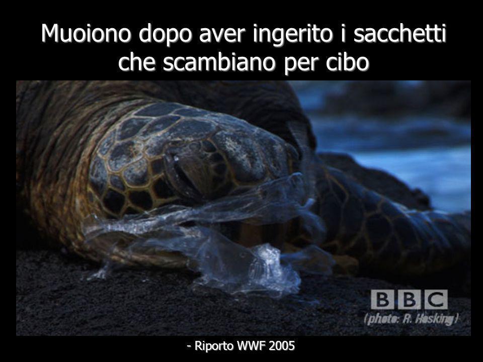 Circa 200 differenti specie di vita marina, includendo balene, delfini, foche e tartarughe muoiono a causa delle borse di plastica … - Riporto WWF 200