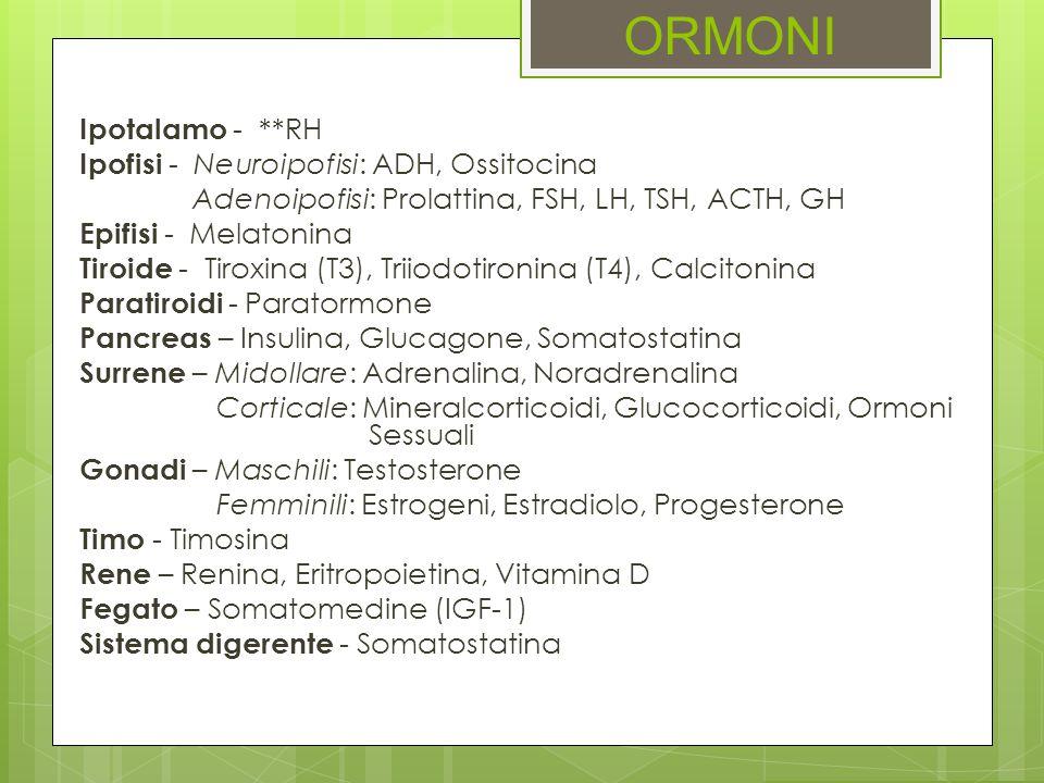 ORMONI Ipotalamo - **RH Ipofisi - Neuroipofisi: ADH, Ossitocina Adenoipofisi: Prolattina, FSH, LH, TSH, ACTH, GH Epifisi - Melatonina Tiroide - Tiroxi