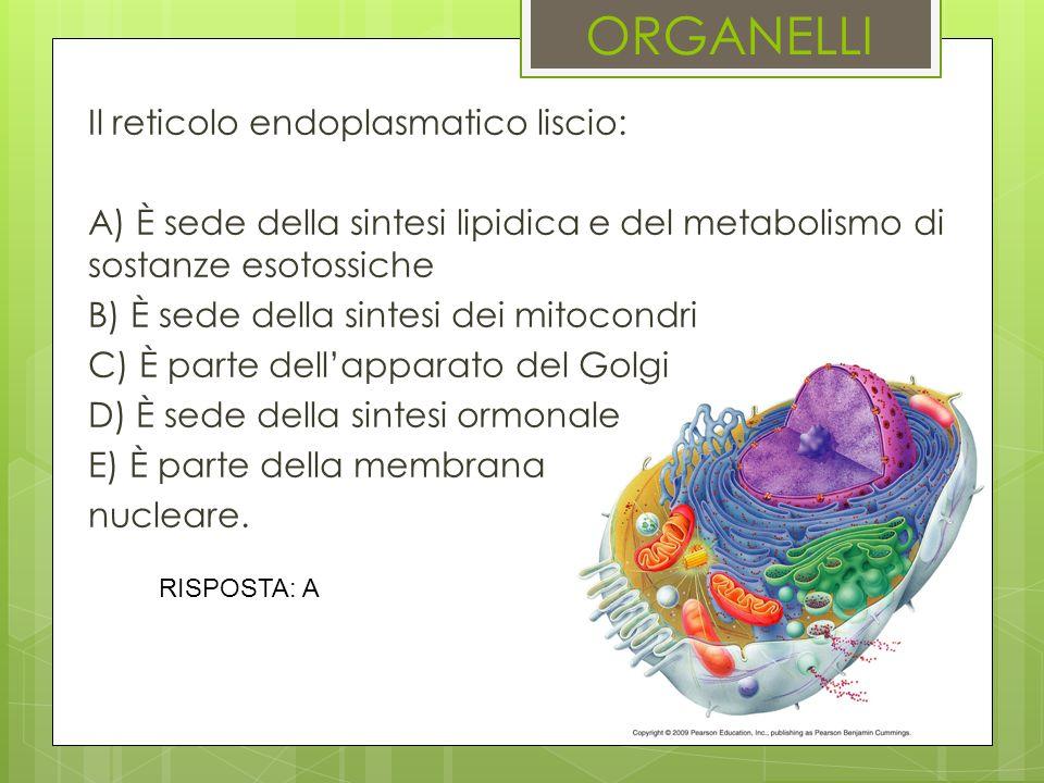 ORGANELLI Il reticolo endoplasmatico liscio: A) È sede della sintesi lipidica e del metabolismo di sostanze esotossiche B) È sede della sintesi dei mi