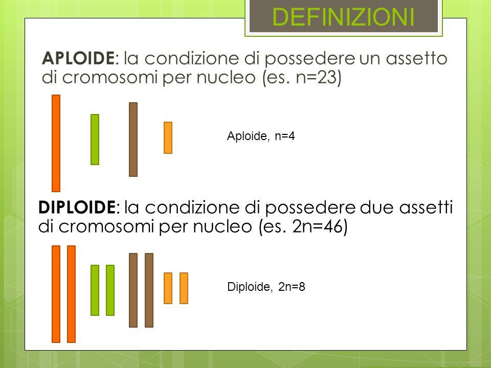 DEFINIZIONI APLOIDE : la condizione di possedere un assetto di cromosomi per nucleo (es. n=23) DIPLOIDE : la condizione di possedere due assetti di cr