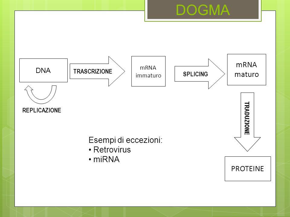 DOGMA TRADUZIONE PROTEINE TRASCRIZIONE mRNA immaturo mRNA maturo SPLICING DNA REPLICAZIONE Esempi di eccezioni: Retrovirus miRNA